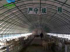 搭建养猪大棚 养牛棚建设 世瑞畜牧设备厂家
